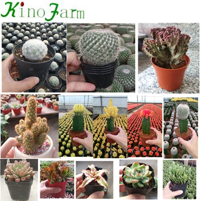 Indoor Small Succulent Plants