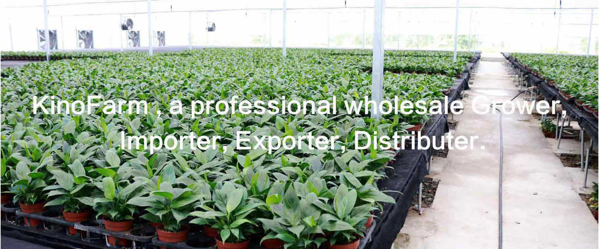 Bonsai Plants Wholesale Grower